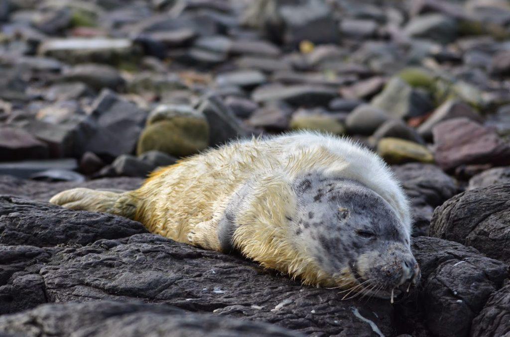 Grey Seal Trip 23rd November Serenity Farne Islands Boat