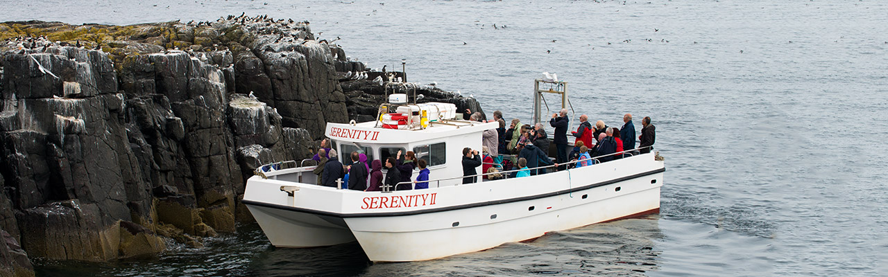The Farne Islands – Serenity Farne Islands Boat Tours and ...
