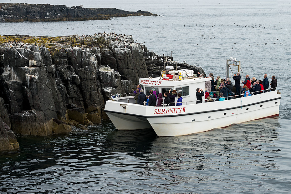 Guests onboard Serenity II enjoying close up views of the Puffins, Guillemots and Kittiwakes at Staple Island